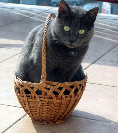 Afbeelding van kat in een wat te klein mandje voor blogartikel over reacties die je kunt hebben als je met remedies aan de slag gaat