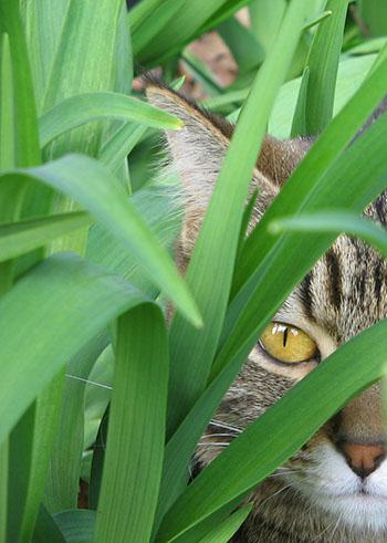 Kat die zich verstopt als illustratie bij een blogpost over weerstand tegen verandering