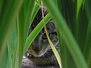 Kat die zich verstopt als illustratie bij blogpost over weerstand tegen verandering