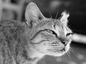 Afbeelding van kat als afbeelding bij een blogartikel over weerstand tegen verandering