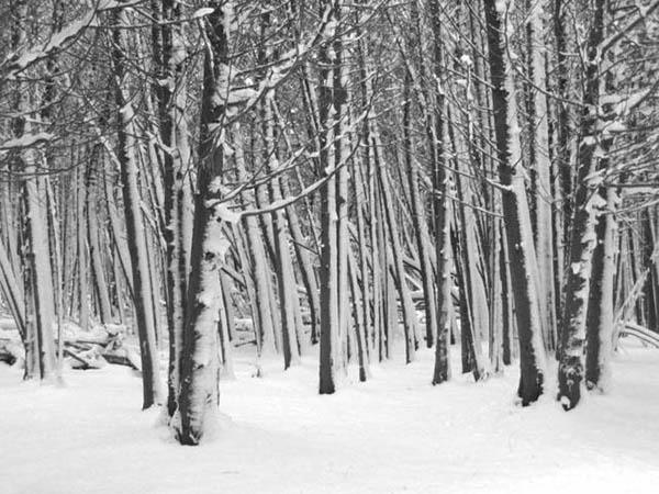 Door de bomen het bos niet meer zien, foto bomen als illustratie bij blogpost over Flow Remedies repertorium, een uitgebreide lijst die je kan helpen een remedie uit te zoeken